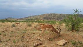 Mâles sous un ciel africain Photographie stock
