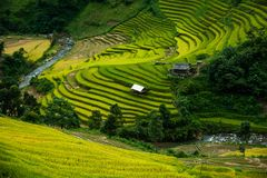 Mù Cang Chải Rice Terrace, Vietnam. Mù Cang Chải Rice Terrace has been recognized as one of the unique landscapes of Vietnam. The Hmong people royalty free stock image