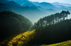 Mù Cang Chải Rice Terrace, Vietnam. Mù Cang Chải Rice Terrace has been recognized as one of the unique landscapes of Vietnam. The Hmong people royalty free stock photography