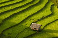 Mù Cang Chải Rice Terrace, Vietnam. Mù Cang Chải Rice Terrace has been recognized as one of the unique landscapes of Vietnam. The Hmong people stock images