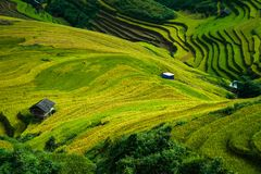 Mù Cang Chải Rice Terrace, Vietnam. Mù Cang Chải Rice Terrace has been recognized as one of the unique landscapes of Vietnam. The Hmong people stock photography