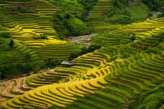 Mù Cang Chải Rice Terrace, Vietnam. Mù Cang Chải Rice Terrace has been recognized as one of the unique landscapes of Vietnam. The Hmong people stock photo