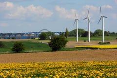 Møn-Insel Stockfoto