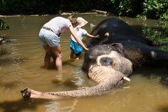 Mãe com as crianças que acariciam o elefante asiático no captiveiro, acorrentado, abusado atraindo turistas imagens de stock royalty free