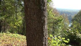 A mãe com o couro cru bonito do jogo do bebê e a semente sobre o tronco de árvore no outono estacionam 4K video estoque