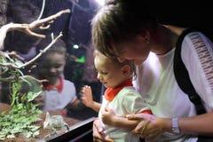 Mãe com o filho que olha o basilisco verde Foto de Stock