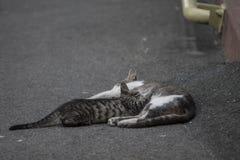 Mãe com o gatinho que encontra-se na estrada verão 2015 Fotos de Stock