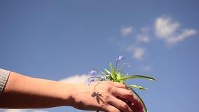 A mãe dá a criança à disposição das flores azuis bonitas no fundo do céu azul, flores Scilla da mola no fundo do azul filme