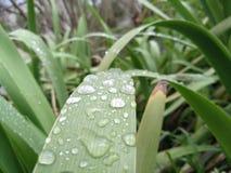 Mãe da natureza, folha com gotas de água nele Fotos de Stock