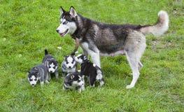 Mãe do cão Fotos de Stock Royalty Free