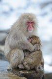 A mãe do macaco abraça seu filho Fotos de Stock Royalty Free