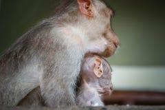 Mãe e bebê do macaco de Macaque da capota fotografia de stock