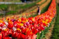 A mãe e a filha escolhem flores na luz do sol foto de stock