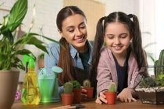 Mãe e filha que tomam de plantas em pasta foto de stock