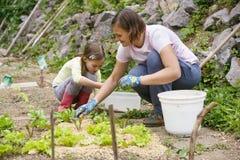 Mãe e filha que trabalham no jardim vegetal imagem de stock