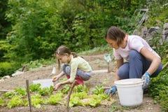 Mãe e filha que trabalham no jardim vegetal foto de stock royalty free
