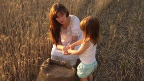 A mãe e pouca criança estão jogando com grão no saco em um campo de trigo o fazendeiro feliz da mãe está jogando com pouco filho video estoque