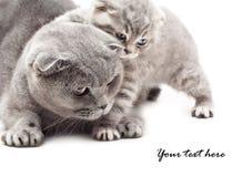 Mãe e seu gatinho Fotos de Stock Royalty Free