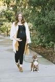 A mãe expectante anda seu cão pequeno no parque em Sunny Day fotografia de stock