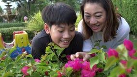 Mãe feliz e filho asiáticos da família que olham a flor cor-de-rosa À mão gravado no movimento lento em 4K em 60fps video estoque