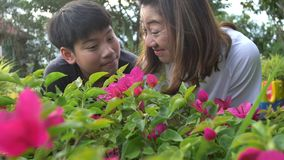 Mãe feliz e filho asiáticos da família que olham a flor cor-de-rosa À mão gravado no movimento lento em 4K em 60fps vídeos de arquivo