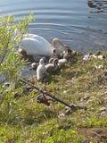 A mãe nadou Imagem de Stock Royalty Free