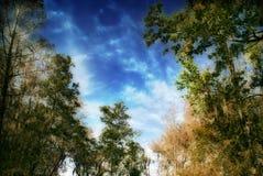 Mãe Natureza Imagem de Stock