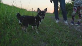 Mãe nova que joga com sua filha no parque com a chihuahua pequena do cão vídeos de arquivo