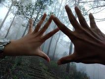 Mão & mão foto de stock