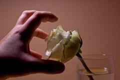 A mão agarra a rosa branca Imagens de Stock Royalty Free