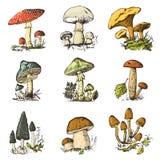 Mão ajustada do cogumelo tirada gravada alimento orgânico do vegetariano do vintage cogumelo, primas, fungo de mel, agaric de mos ilustração royalty free