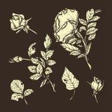 Mão altamente detalhada rosas tiradas ajustadas flor Fotografia de Stock