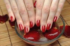 Mão bonita com manicure e as pétalas vermelhos do prego Fotos de Stock Royalty Free