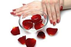 Mão bonita com manicure e as pétalas vermelhos do prego Foto de Stock