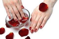 Mão bonita com manicure perfeito do vermelho do prego Fotografia de Stock