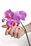 A mão bonita com manicure vermelho e a orquídea florescem fotografia de stock