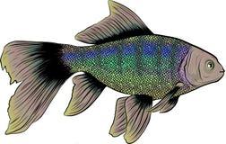Mão bonita ilustração tirada com peixes diferentes ilustração stock