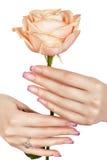 Mão bonita que guarda uma rosa. Foto de Stock