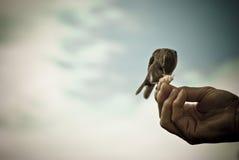 Mão caritativa Foto de Stock