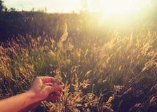 A mão com flor foto de stock