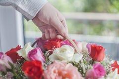 Mão com flor Fotos de Stock Royalty Free