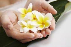 Mão com flor Foto de Stock Royalty Free
