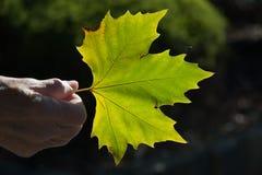 Mão com folha Foto de Stock