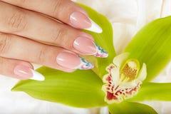 A mão com francês artificial longo manicured pregos e flor da orquídea Fotografia de Stock