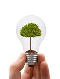 Mão com lâmpada e árvore