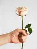 A mão com levantou-se Fotografia de Stock