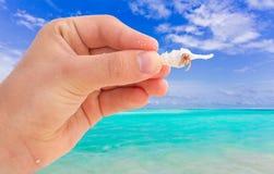 Mão com o caranguejo no escudo do mar Imagem de Stock Royalty Free