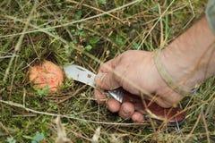 Mão com o tampão do leite da faca e do açafrão Imagem de Stock Royalty Free