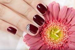 Mão com os pregos manicured curtos coloridos com verniz para as unhas roxo escuro Imagem de Stock Royalty Free