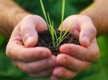 Mão com planta Foto de Stock Royalty Free